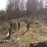 Tree planting event in Bratton proves to be a huge success